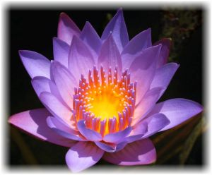 crown-chakra-flower-lotus