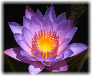 crown-chakra-flower-lotus